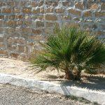 palma Tunezja