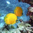 rybki morze czarne